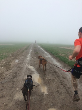 A very foggy Three Forts Challenge Half Marathon Worthing 3rd May 2015
